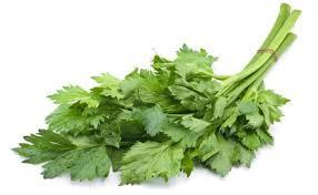 Manfaat dari daun seledri