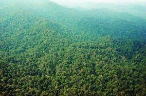 Mengungkap Manfaat Hutan bagi Kehidupan